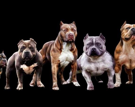 Nauka chodzenia psa przy nodze – w kilku prostych krokach