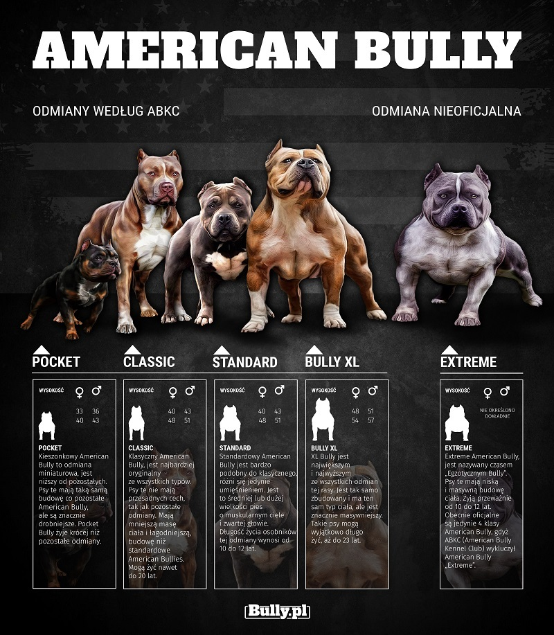 American Bully - odmiany, standardy według American Bully Kennel Club