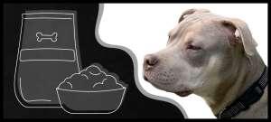 główne błędy żywieniowe psa